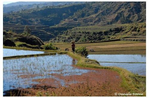 Rizière auprès de Antsirabe