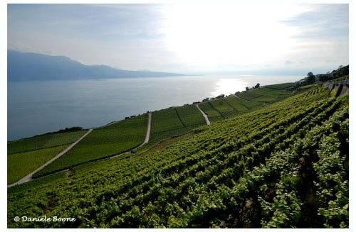 Le vignoble de Lavaux vu du Deck