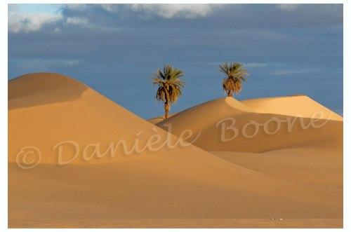 Libye - Les dunes de Zawila