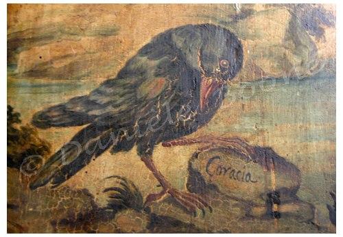 Corbeau - détail du Salon des Oiseaux, palais Biscari