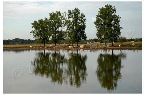 Un des mille étangs de la Brenne