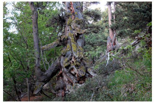 Forêt de l'Orgère
