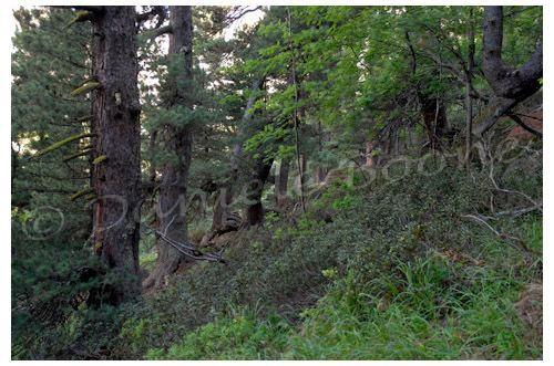 Forêt d'Orgères