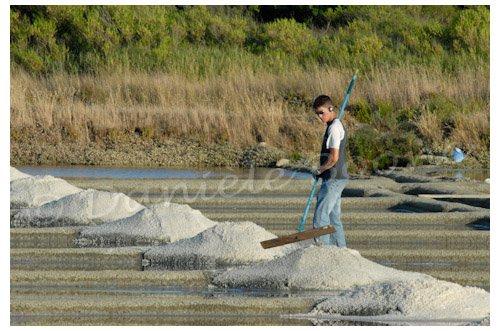 Un jeune paludier travaille dans les marais salants de Batz sur mer
