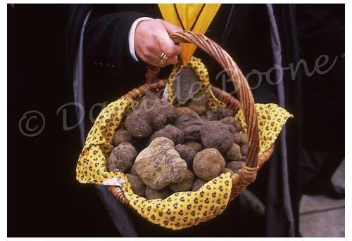 Le panier de truffes récoltées pendant la quête