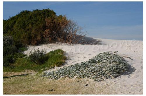 Betty's Bay est une réserve marine © Danièle Boone