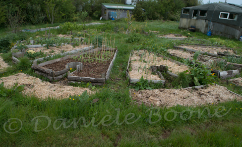 Permaculture on pinterest permaculture design wattle for Jardin mandala