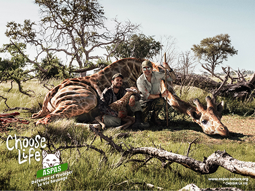 Aspas-Girafe