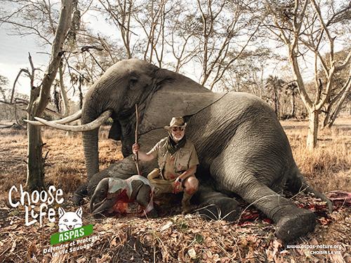 Aspas-elephant