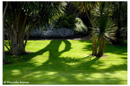 Jeux d'ombres au jardin Georges Delaselle