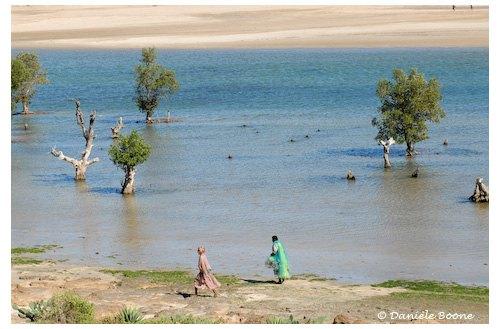 Mangrove entre Tulear et Ifaty