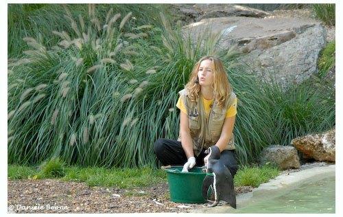 La soigneuse nourrit les manchots de Humboldt et explique qui ils sont au public
