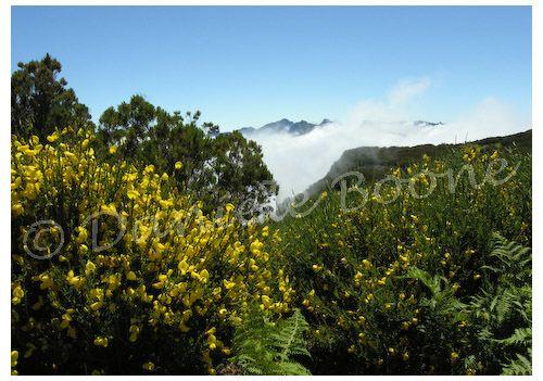Madère - plateau Paul da Serra © Danièle Boone