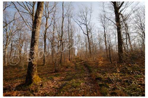 Le monastère a été bâti au milieu de la forêt © Danièle Boone