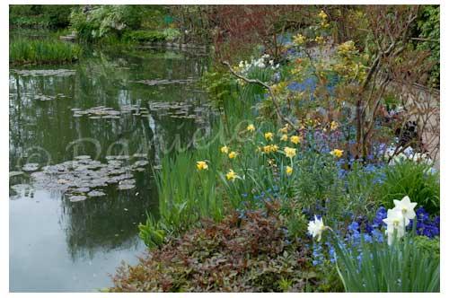 Le jardin d'eau © Danièle Boone