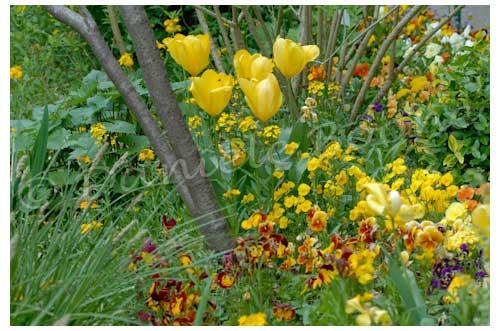 Dans les zones ombragées, le jaune attire la lumière © Danièle   Boone