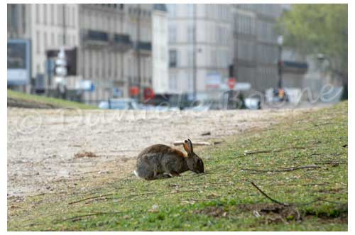 Lapin porte Maillot© Danièle Boone
