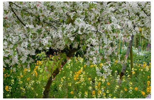 Le jardin de Monet à Giverny © Danièle Boone