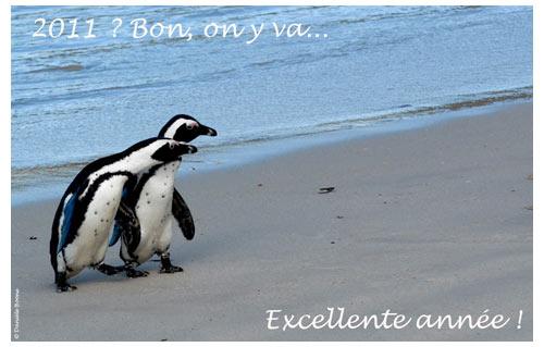 Bonne année des Manchots du Cap © Danièle Boone