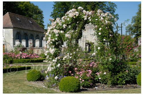 La roseraie de l'Abbaye de Chaalis © Danièle Boone