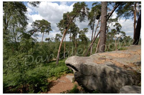 Forêt d'Ermenonville © Danièle Boone