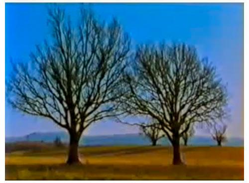 """Image extraite du film """"Arbre, un voyage immobile"""" de Sophie Bruneau et Marc-Antoine Roudil"""