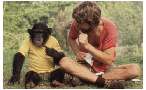 Nim le chimpanzé a appris la langue des signes