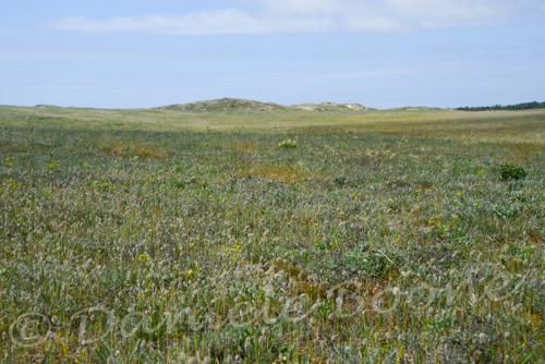 La dune de La Guérinière