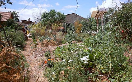 jardin mené en permaculture