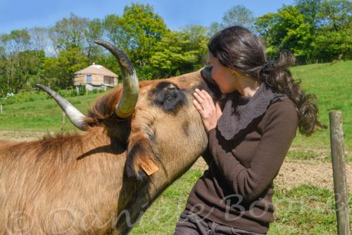 Marion Baranton et Iris, vache maraîchine